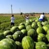 L'Alto Jonio chiede aiuto: «Priorità al rilancio dell'agroecosistema»
