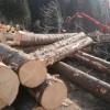 L'oro di Saracena potrebbe essere il legno. Dai boschi nuove opportunità di lavoro?