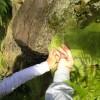"San Severino. ""Pianta un albero, tutela il pianeta"""