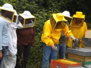 apicoltura oriolo