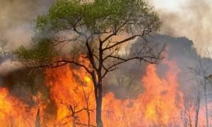 incendio-foresta