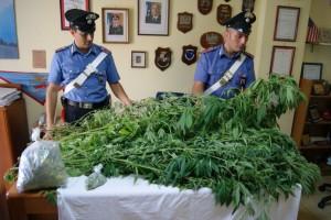 cannabis spezzano sila