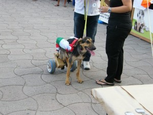 mostra canina rocca 2013