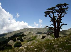 Paesaggio4-800