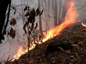 incendi_boschivi_4