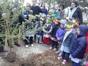 festa albero saraceno