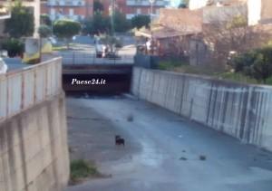Il cane nel canale prima di essere recuperato