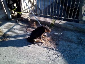 Il cane appena recuperato