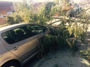 """Nei pressi dell'l'Istituto comprensivo statale """"Umberto Zanotti Bianco"""" di Sibari le folate di vento hanno sradicato un albero, che è finito addosso ad alcune macchine presenti nei paraggi."""