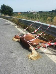 Il cavallo trovato morto