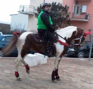 Cavallo più bello palio treby 2017